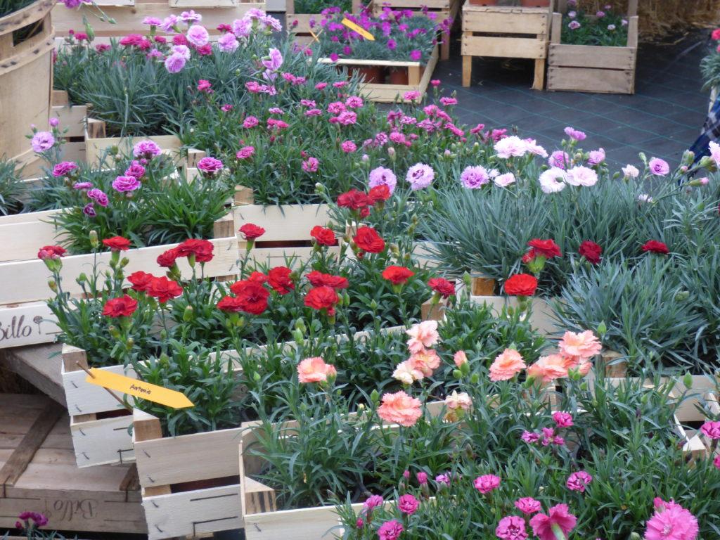 Floricoltura Billo